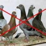 barrière anti pigeons pratiquement invisible.
